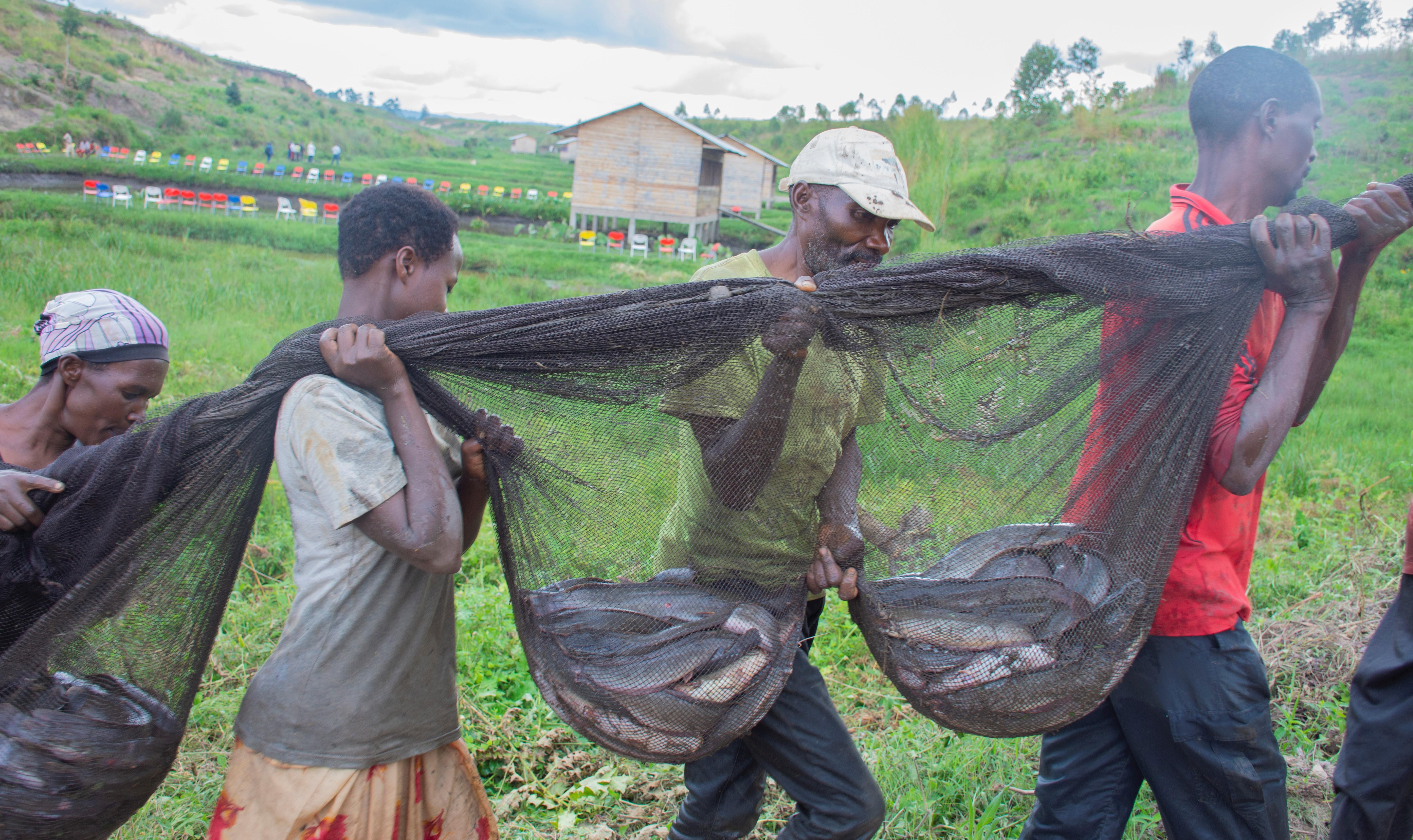 Le poisson n'est plus un mythe en dehors du lac Tanganyika